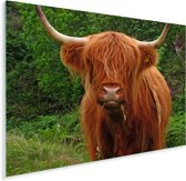 Een etende Schotse hooglander koe Plexiglas 160x120 cm - Foto print op Glas (Plexiglas wanddecoratie) XXL / Groot formaat!
