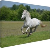 Rennend wit paard Canvas 120x80 cm - Foto print op Canvas schilderij (Wanddecoratie)
