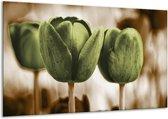 Glasschilderij Tulpen   Bruin, Groen   120x70cm 1Luik   Foto print op Glas    F002794