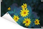 Groep gele bloesems van de aardpeer of de jeruzalemartisjok Tuinposter 60x40 cm - klein - Tuindoek / Buitencanvas / Schilderijen voor buiten (tuin decoratie)