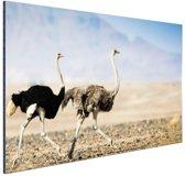 Twee rennende struisvogels Aluminium 90x60 cm - Foto print op Aluminium (metaal wanddecoratie)