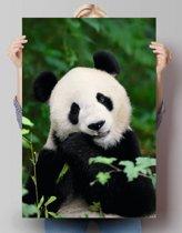 Pandabeer - Poster 61 x 91.5 cm