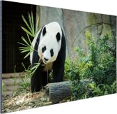 Grote panda Aluminium 60x40 cm - Foto print op Aluminium (metaal wanddecoratie)