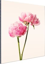 FotoCadeau.nl - Roze Bloesem Aluminium 30x20 cm - Foto print op Aluminium (metaal wanddecoratie)