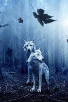 Wolves in the Dark Forest