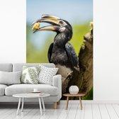 Fotobehang vinyl - Dubbelhoornige neushoornvogel die een stuk banaan eet breedte 235 cm x hoogte 350 cm - Foto print op behang (in 7 formaten beschikbaar)