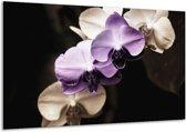 Glasschilderij Orchidee | Paars, Zwart, Grijs | 120x70cm 1Luik | Foto print op Glas |  F002722