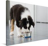 Een Border Collie die eet van zijn voedsel Canvas 80x60 cm - Foto print op Canvas schilderij (Wanddecoratie woonkamer / slaapkamer) / Huisdieren Canvas Schilderijen