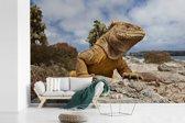 Fotobehang vinyl - Oplettende Galapagos Landleguaan op de stenen van het eiland Plaza breedte 420 cm x hoogte 280 cm - Foto print op behang (in 7 formaten beschikbaar)