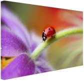 Lieveheersbeestje op een paarse bloem Canvas 120x80 cm - Foto print op Canvas schilderij (Wanddecoratie)