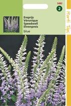 Hortitops Zaden - Veronica Spicata (Ereprijs) Blauw