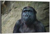 Dibond –Gorilla – 90x60cm Foto op Dibond;Aluminium (Wanddecoratie van metaal)