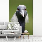 Fotobehang vinyl - Dierenportret van de kop van een jufferkraanvogel breedte 215 cm x hoogte 320 cm - Foto print op behang (in 7 formaten beschikbaar)