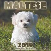 Maltese 2019 Mini Wall Calendar