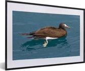 Foto in lijst - Een bruine gent zwemt in het blauwe water fotolijst zwart met witte passe-partout 60x40 cm - Poster in lijst (Wanddecoratie woonkamer / slaapkamer)