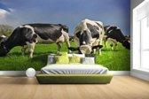 FotoCadeau.nl - Kudde grazende koeien Fotobehang 380x265