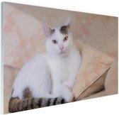 Prachtige kat Glas 90x60 cm - Foto print op Glas (Plexiglas wanddecoratie)