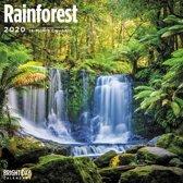Rain Forest Wall Calendar 2020