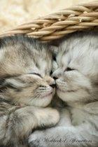 Cute Tabby Kittens Workbook of Affirmations Cute Tabby Kittens Workbook of Affirmations