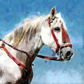 Andalusisch /  Arabisch wit volbloed paard in Velez Malaga in Spanje, Andalusië   abstract, modern, sfeer   Foto schilderij print op Glas (plexiglas wanddecoratie)   90x90cm