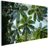 Bomen en bladeren in jungle Glas 120x80 cm - Foto print op Glas (Plexiglas wanddecoratie)