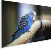 Knalblauwe parkiet op een dik touw Plexiglas 90x60 cm - Foto print op Glas (Plexiglas wanddecoratie)