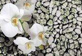 Fotobehang Flowers Orchids Stones | XXXL - 416cm x 254cm | 130g/m2 Vlies