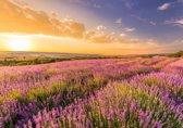 Papermoon Lavender Field Vlies Fotobehang 200x149cm 4-Banen