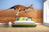 Actiefoto van kangoeroe Fotobehang 380x265