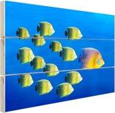 School tropische vissen Hout 60x40 cm - Foto print op Hout (Wanddecoratie)