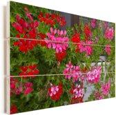 Geranium bloemen in de tuin Vurenhout met planken 120x80 cm - Foto print op Hout (Wanddecoratie)