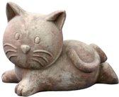 kitten lying mterra h21