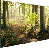 Een bospad verlicht door de zon Aluminium 180x120 cm - Foto print op Aluminium (metaal wanddecoratie) XXL / Groot formaat!