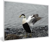 Foto in lijst - Een grote eidereend spreidt zijn vleugels fotolijst wit 60x40 cm - Poster in lijst (Wanddecoratie woonkamer / slaapkamer)