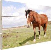 Paard staat in gras Hout 120x80 cm - Foto print op Hout (Wanddecoratie)
