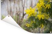Sierlijke mimosa bloem Tuinposter 60x40 cm - klein - Tuindoek / Buitencanvas / Schilderijen voor buiten (tuin decoratie)