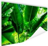 Tropische bladeren in jungle  Poster 180x120 cm - Foto print op Poster (wanddecoratie woonkamer / slaapkamer) XXL / Groot formaat!