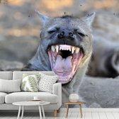 Fotobehang vinyl - Een gapende Hyena in Afrika breedte 440 cm x hoogte 400 cm - Foto print op behang (in 7 formaten beschikbaar)