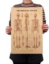 Vintage poster - Skelet van het menselijk Lichaam A3 - Retro muurdecoratie / muurposter - Leerzaam / Educatieve poster