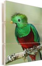 Portret van een felgekleurde Quetzal Vurenhout met planken 40x60 cm - Foto print op Hout (Wanddecoratie)