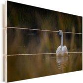 Een trompetzwaan zwemt richting de camera Vurenhout met planken 90x60 cm - Foto print op Hout (Wanddecoratie)