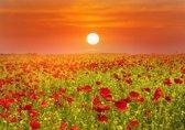 Papermoon Red Poppies Field Vlies Fotobehang 300x223cm 6-Banen
