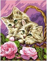 Schilderen op Nummer - Kitten