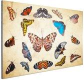 Botanische print vlinders Aluminium 90x60 cm - Foto print op Aluminium (metaal wanddecoratie)