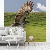 Fotobehang vinyl - Een Buizerd met gestrekte vleugels breedte 240 cm x hoogte 240 cm - Foto print op behang (in 7 formaten beschikbaar)