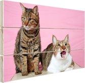 Twee katten voor roze achtergrond Hout 60x40 cm - Foto print op Hout (Wanddecoratie)