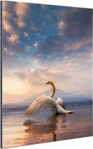 Opstijgende zwaan Aluminium 80x120 cm - Foto print op Aluminium (metaal wanddecoratie)