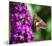 Foto in lijst - Vlinder op de vlinderstruik fotolijst wit 50x40 cm - Poster in lijst (Wanddecoratie woonkamer / slaapkamer)