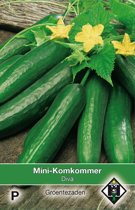 Van Hemert - Mini Komkommer Diva