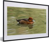 Foto in lijst - Een witoogeend zwemt in groen water fotolijst zwart met witte passe-partout 60x40 cm - Poster in lijst (Wanddecoratie woonkamer / slaapkamer)